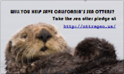 Save the California Sea Otter